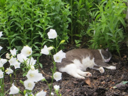 Grey and white cat sleeping in the garden