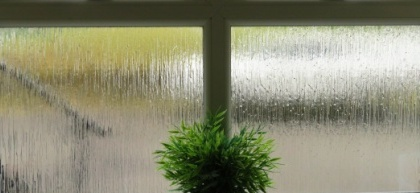 green plant inside rain covered window