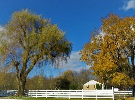 White Fence in Autumn