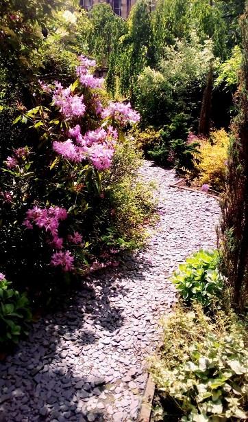 pebbled garden pathway through pink shrubs