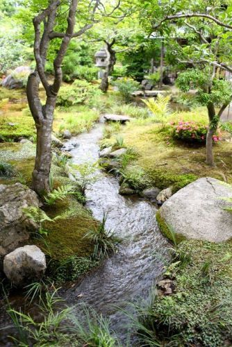 Stream running through lush green woodland