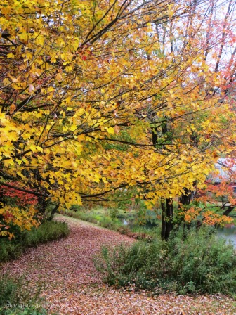Autumn leaf covered pathway