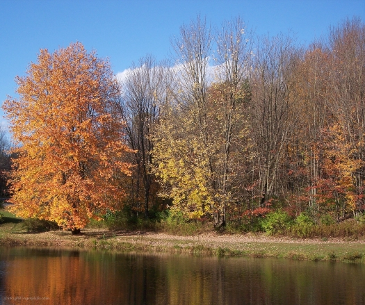 Autumn Firebush Reflected in pond