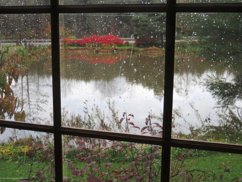 Rain Over Reflection in Autumn Pond