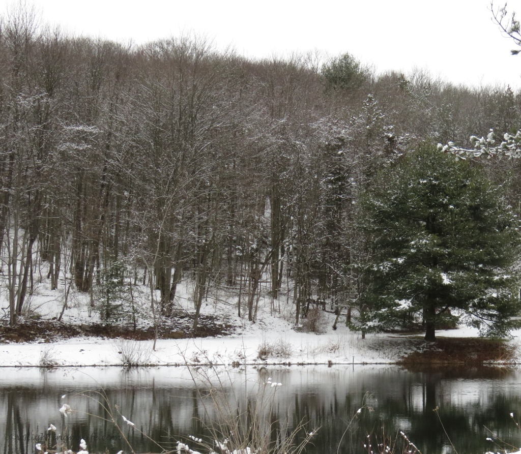 Pond reflecting snow and trees
