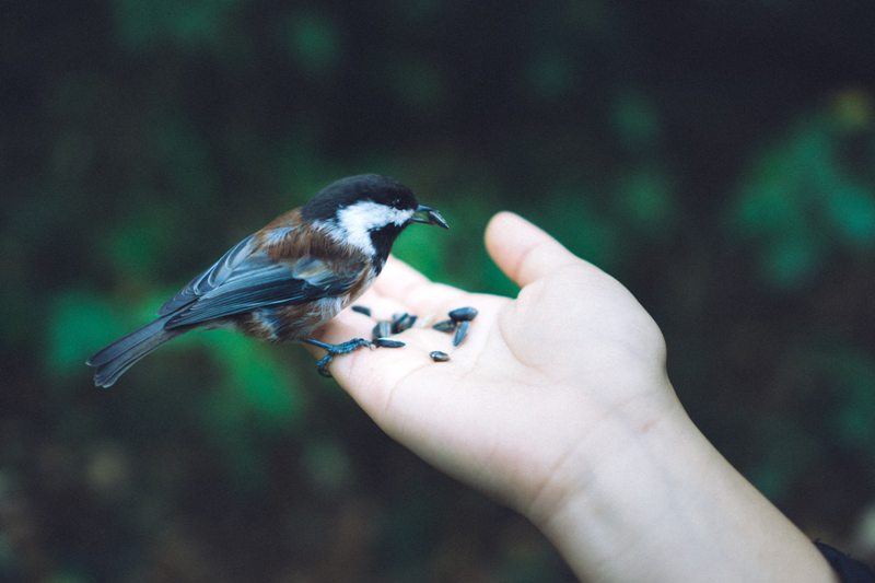 Outstretched hand with seed and bird