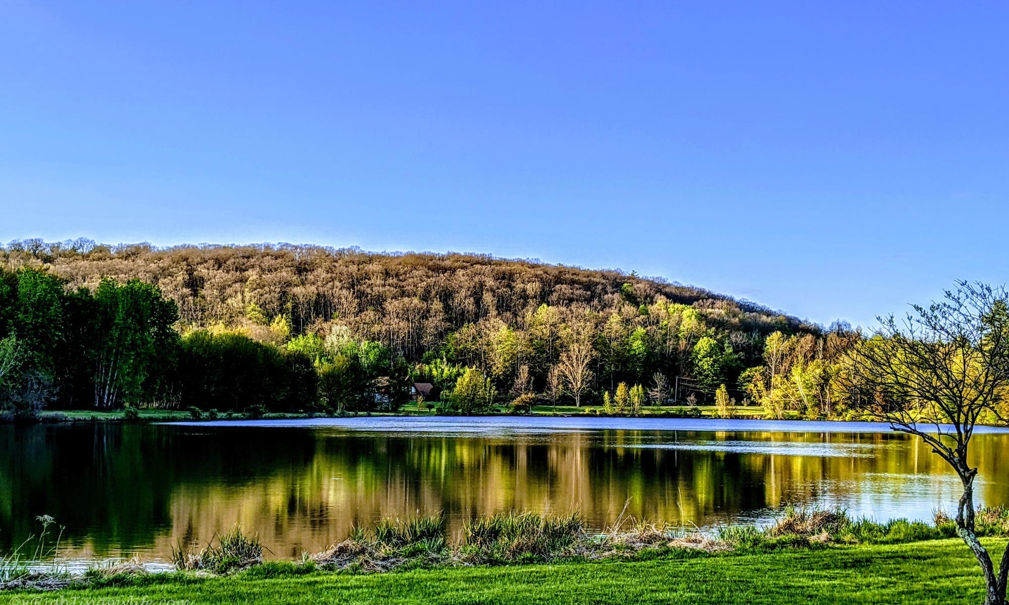 autumn trees vividly reflected