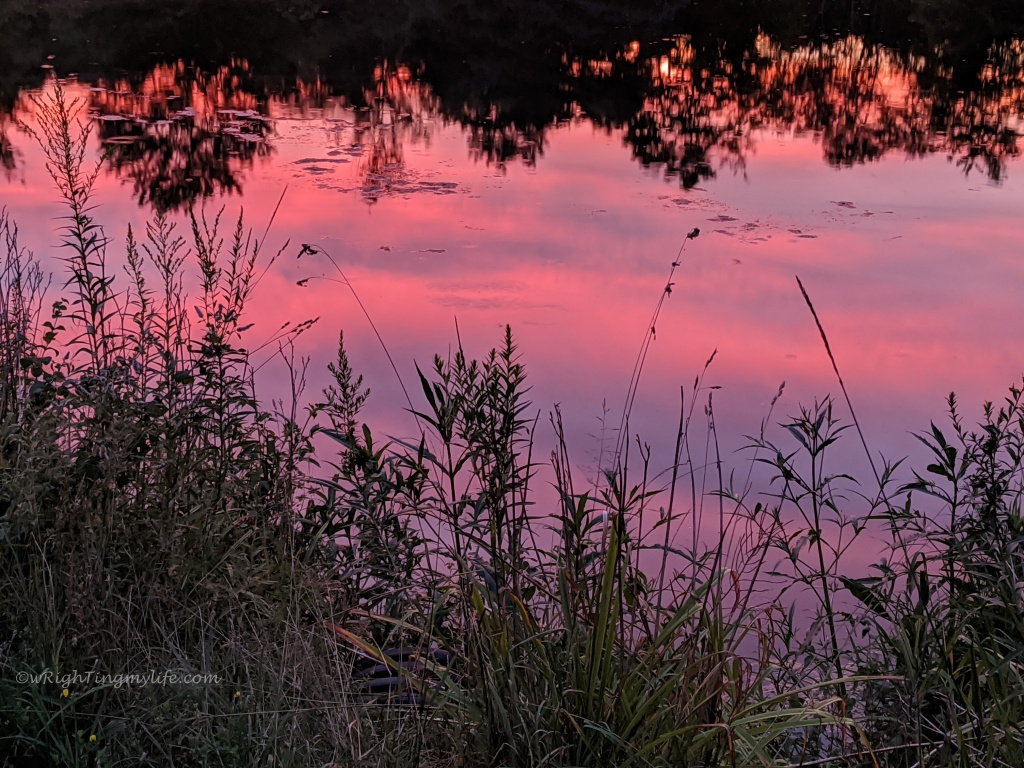 pink sunset reflected in pond