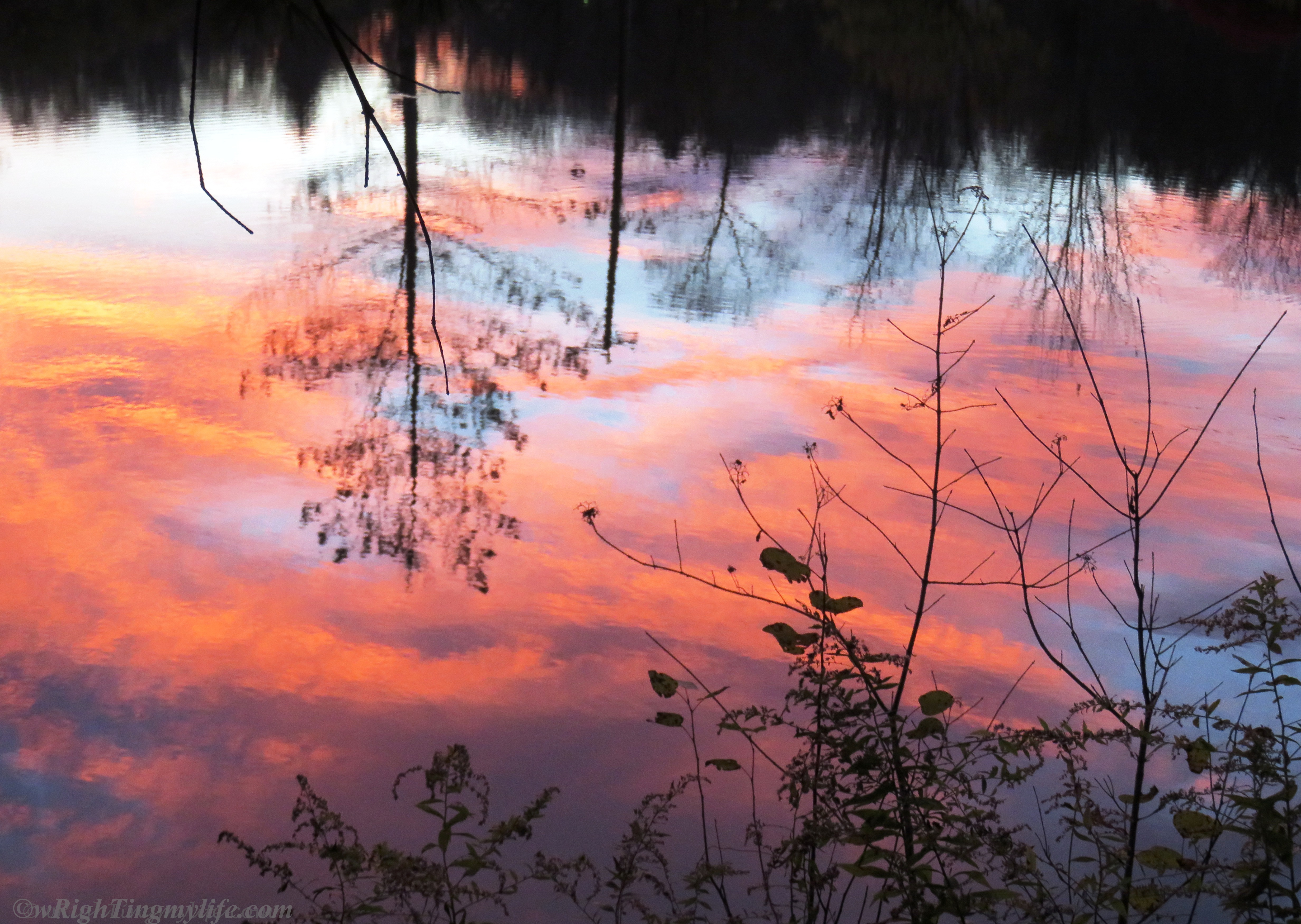 Vibrant sunset reflected among silhoutted trees and brush in pond