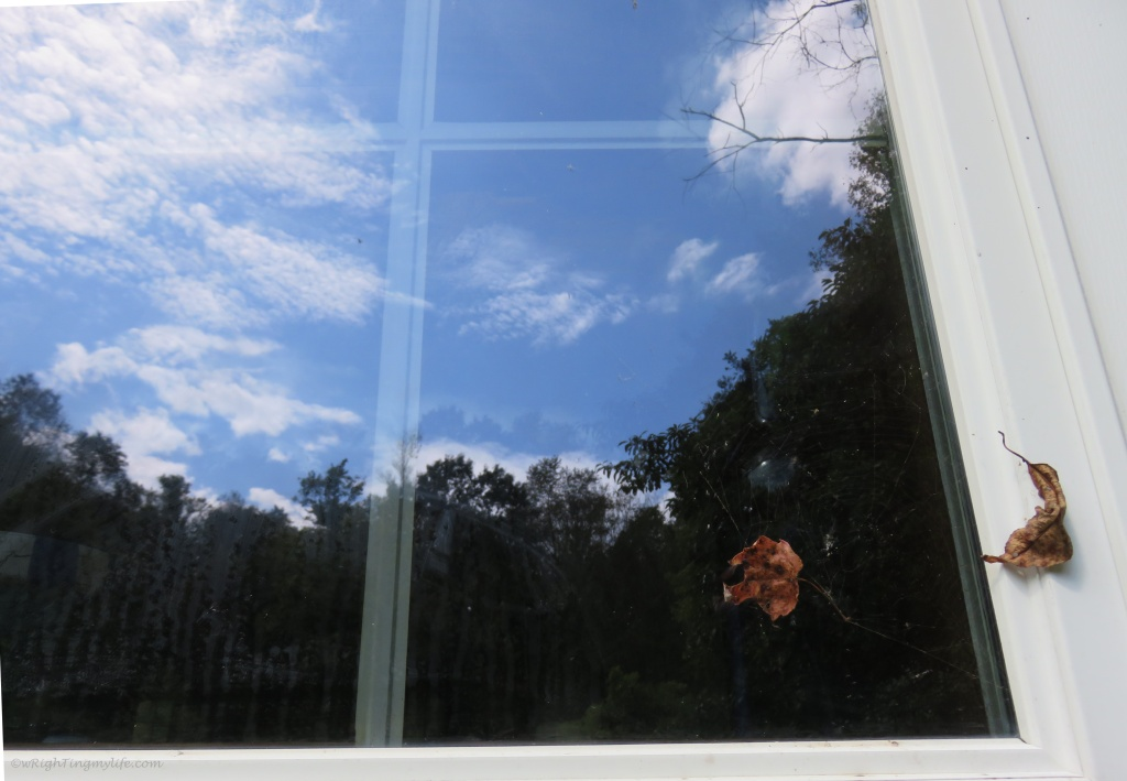Blue sky and white clouds and trees reflected in window with leaf stuck on outside