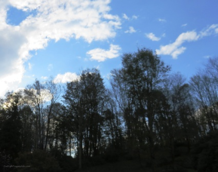 Vivid blue sky and white puffy clouds amidst autumn trees