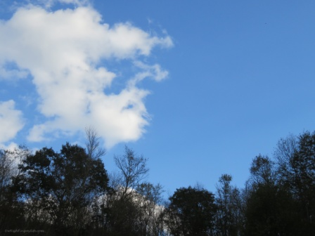 Vivid blue sky with white puffy clouds showing a heart amidst autumn trees