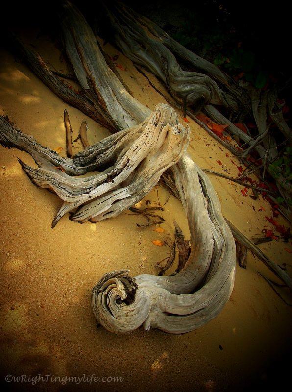 driftwood and beach debris